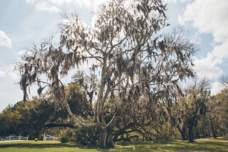Southern-Savannah-Georgia-Wedding-55